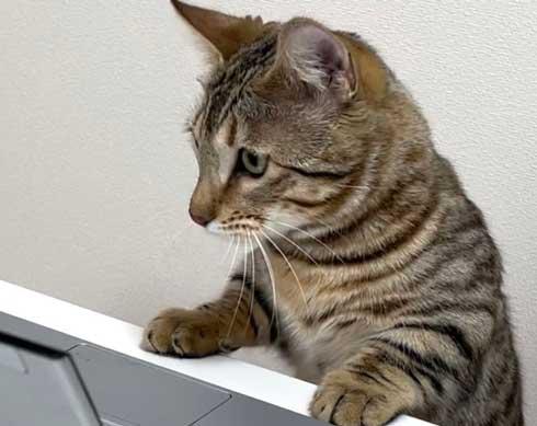 トイレから戻ったら 猫 オンライン会議 PC ジェネッタ