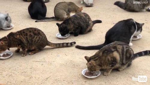 Horde of Cute Catsr