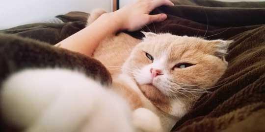 寝てるとき 猫 飼い主 記憶 消している 飽きない 漫画 凸ノ高秀
