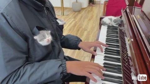 「Kittens Listening to Piano Music Fall Asleep    ViralHog」