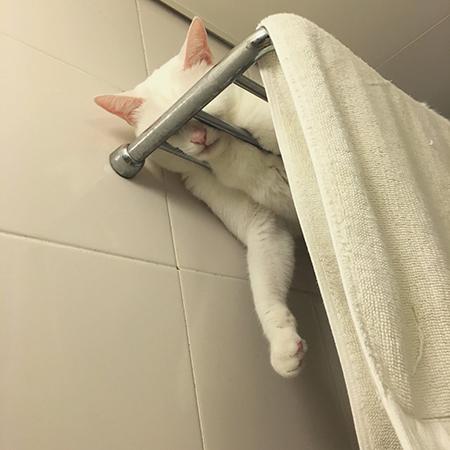 目隠ししてタオルに擬態するやっこさん