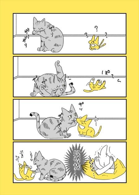 猫のことは把握済