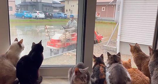 Cat house  柚の家さん
