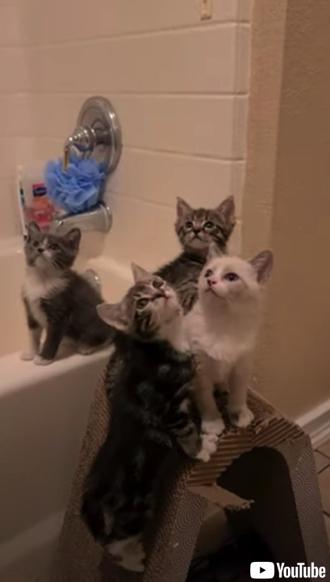 4匹の子猫のシンクロ