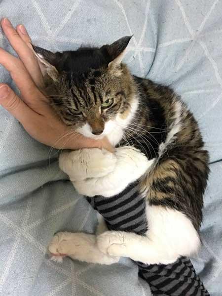 猫 ヤマダ 腕 抱きつき ハグ 鳴き声 かわいい 回復バフ 動画