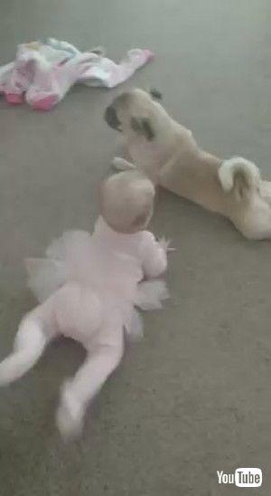 「Pug Teaches Kiddo How to Crawl || ViralHog」