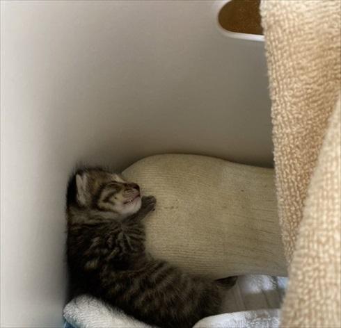 子猫保温術