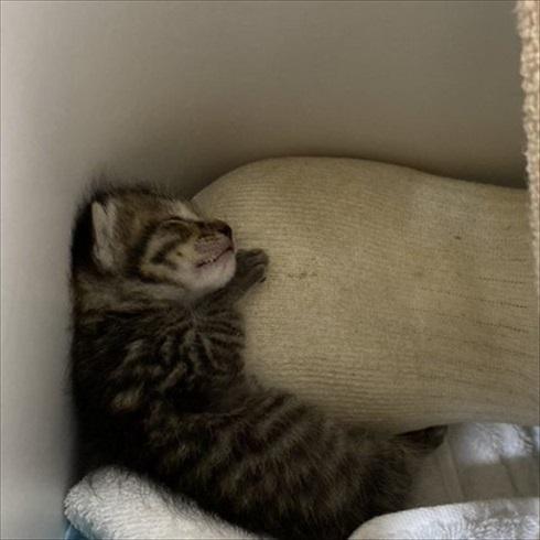 子猫ちゃんの保温術