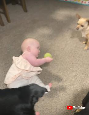 テニスボールで遊ぶ赤ちゃんとワンコ