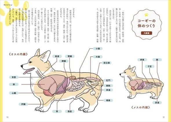 家庭犬の医学