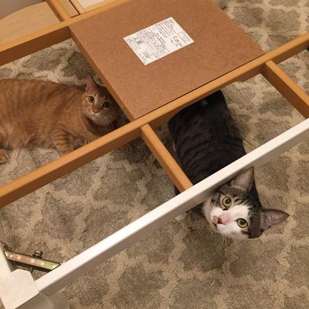 こたつを撤去された猫ちゃん