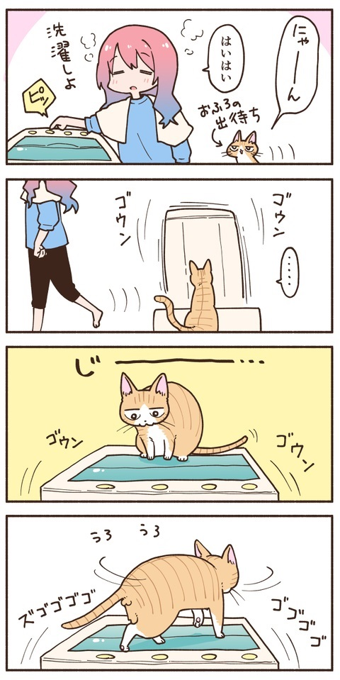 洗濯機の中が気になる猫