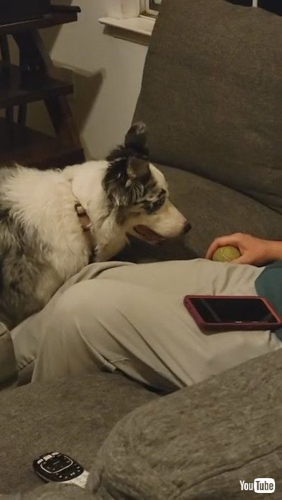 「Pug Teaches Kiddo How to Crawl    ViralHog」