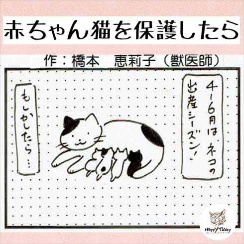 子猫保護漫画