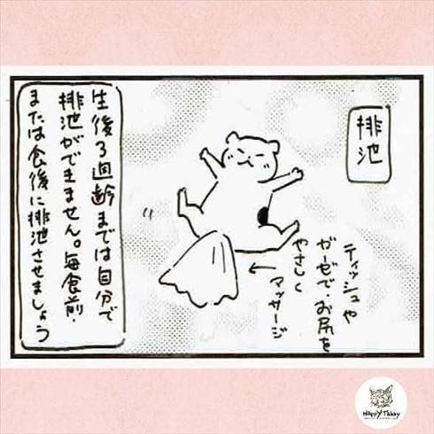 赤ちゃん猫を保護したら