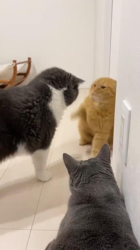 猫パンチ前