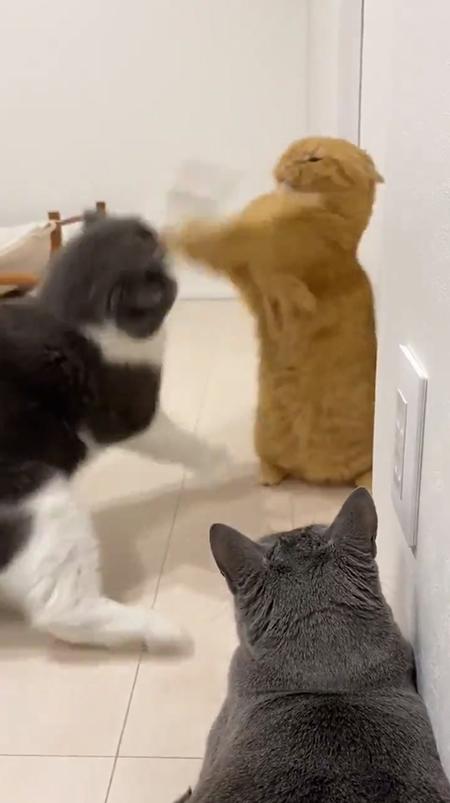 激しく攻防する2匹