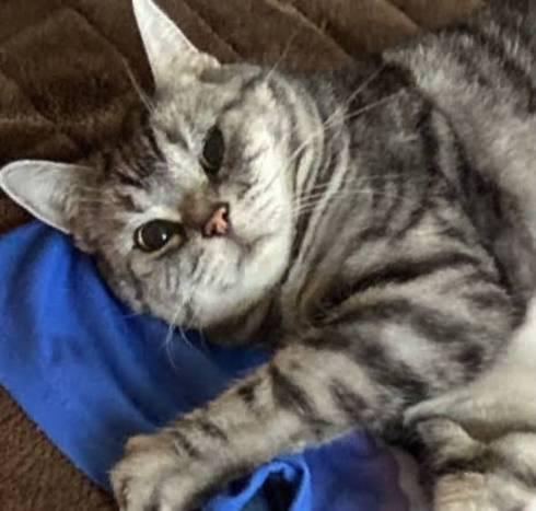 猫 モチコちゃん いなずま Tシャツ