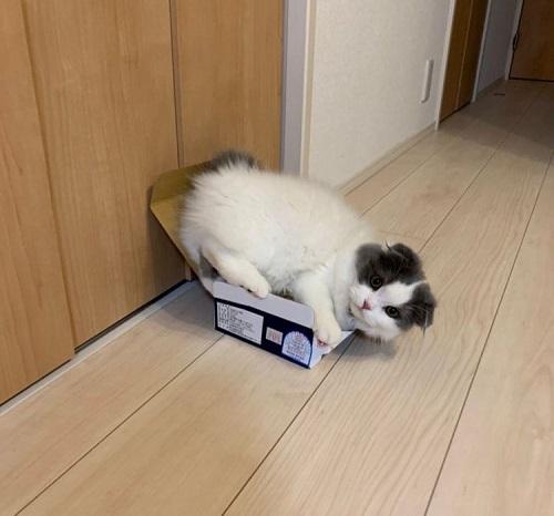 猫を撮影するコツ