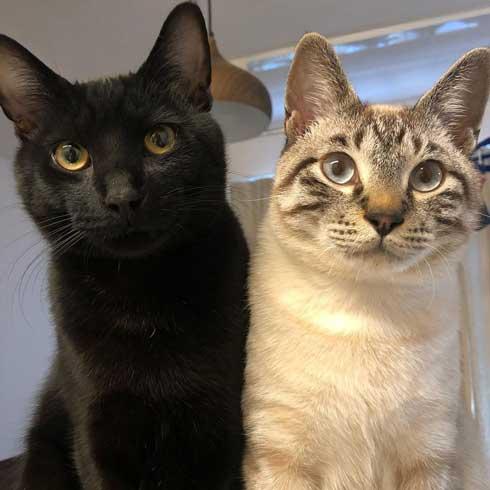 猫 掃除機 反応 変な体勢 怖がる 人間みたい かわいい つかまり立ち