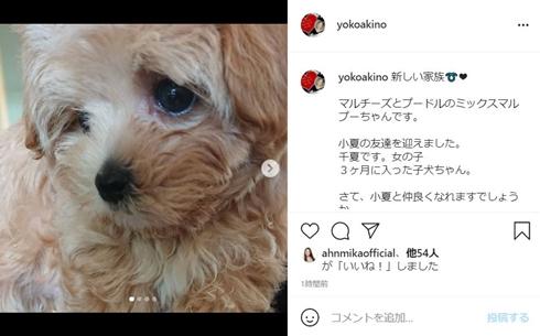 秋野暢子 小夏 マルプー レイチェル 犬 現在