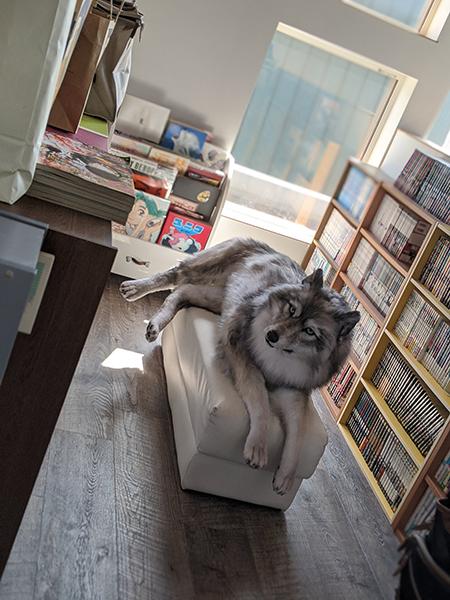 漫画部屋のオオカミ