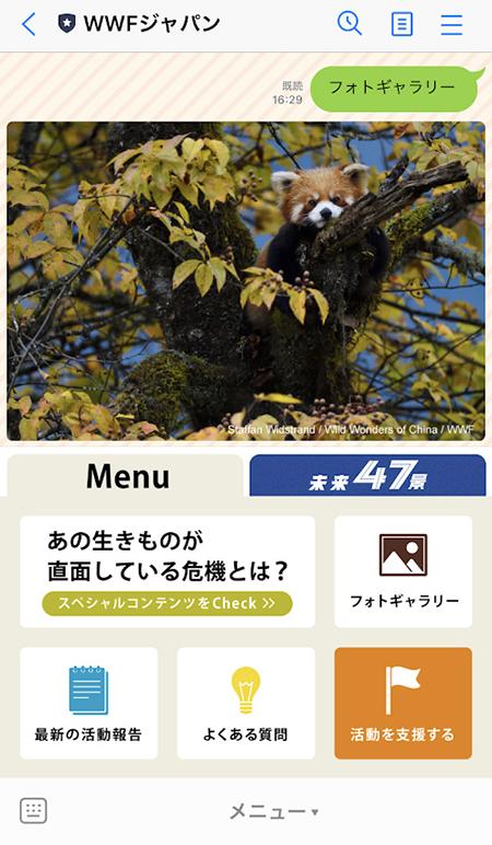 LINE・フォトギャラリーのレッサーパンダ