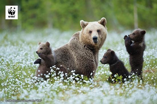 親子のクマ