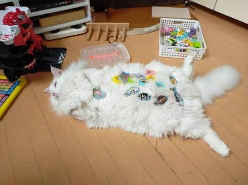 デカ猫 やしゅうさん トヨちゃん
