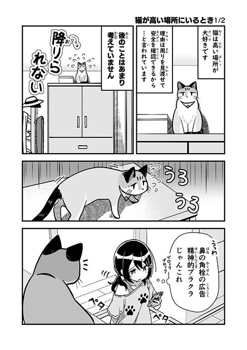猫が高い場所にいる時1