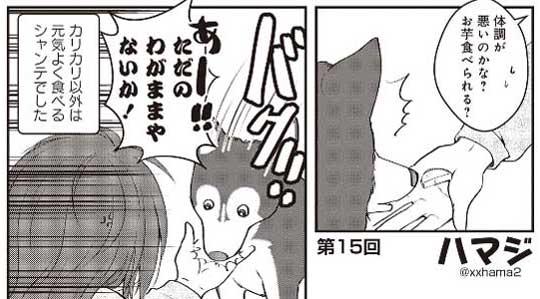 猫とハスキーとハマジ 子犬 ハスキー 成長 エサ 苦戦 漫画