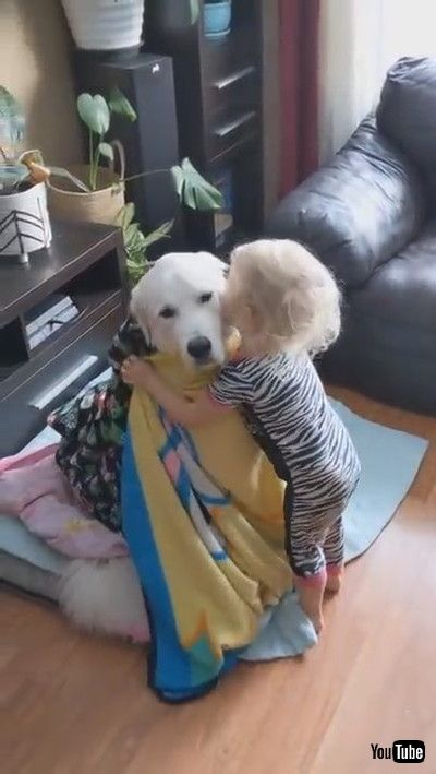 「Toddler Wraps Dog With Blankets While They Sit Patiently - 1167772」