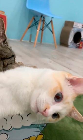 保護猫カフェきゃりこさん