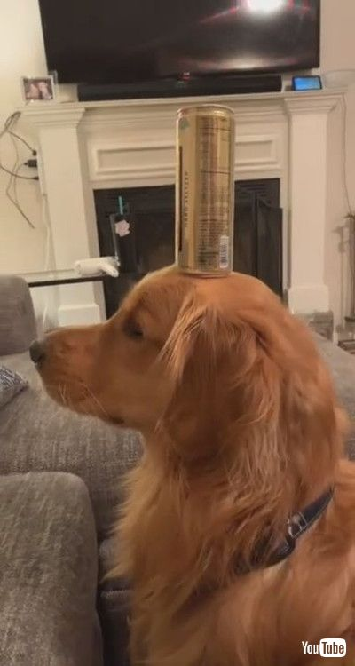 「Level-Headed Dog has Staredown with Cat || ViralHog」