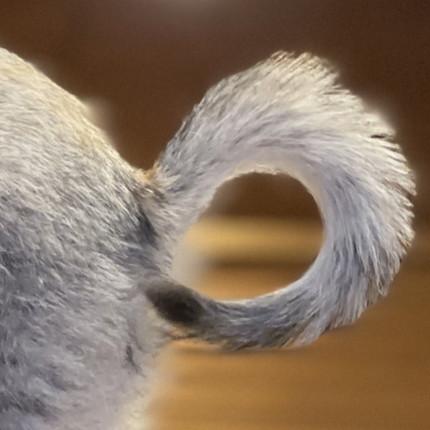 手の上で背伸びするネコちゃん