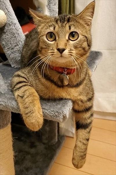 猫脱走防止柵