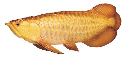 リュウグウノツカイが捕獲できる 世界の怪魚と猛魚のフィギュア「世界釣大戦モンスターフィッシュ」登場