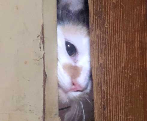 シャイニング 家政婦は見た 猫
