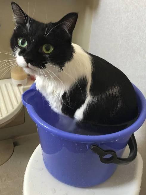 猫 悟りをひらいた お風呂 ふくちゃん