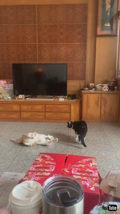 「Roly Poly Battle Cats    ViralHog」