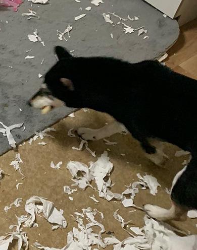 ともぞう@犬猫屋敷さん