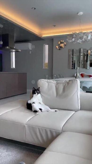 新居になれすぎな猫