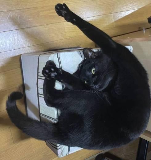 猫 逆さまの猫 アニカちゃん