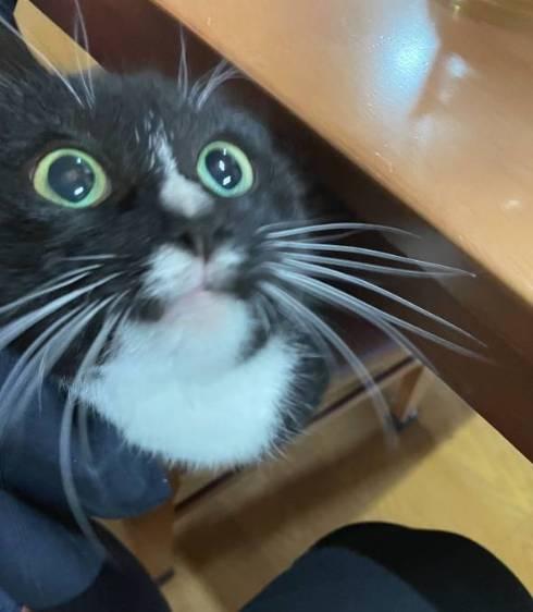 猫 逆さまの猫