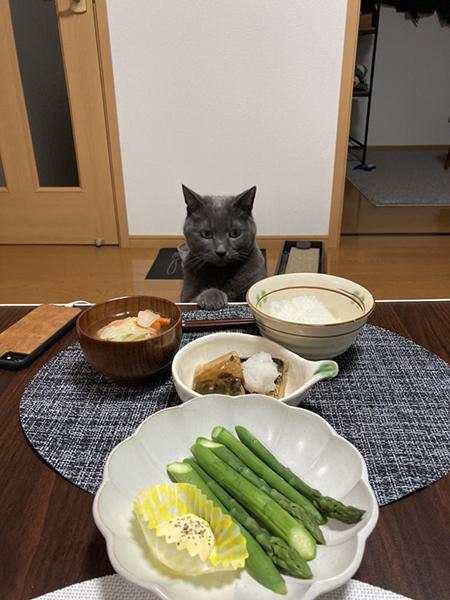 食卓を見つめるくろすけくん