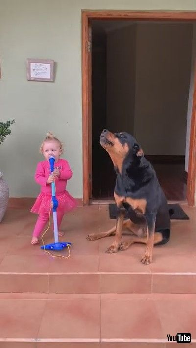 「Toddler and Pet Dog Sing Together Loudly - 1199461-2」
