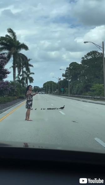 女性のサポートで道路を横断するカモの親子