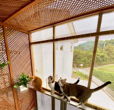 大改造DIYベランダでネコちゃん満足