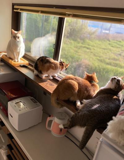 ネコちゃんたちの日々
