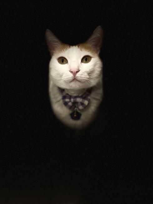 暗闇に浮かぶ猫